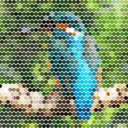 filterforgekingfisher