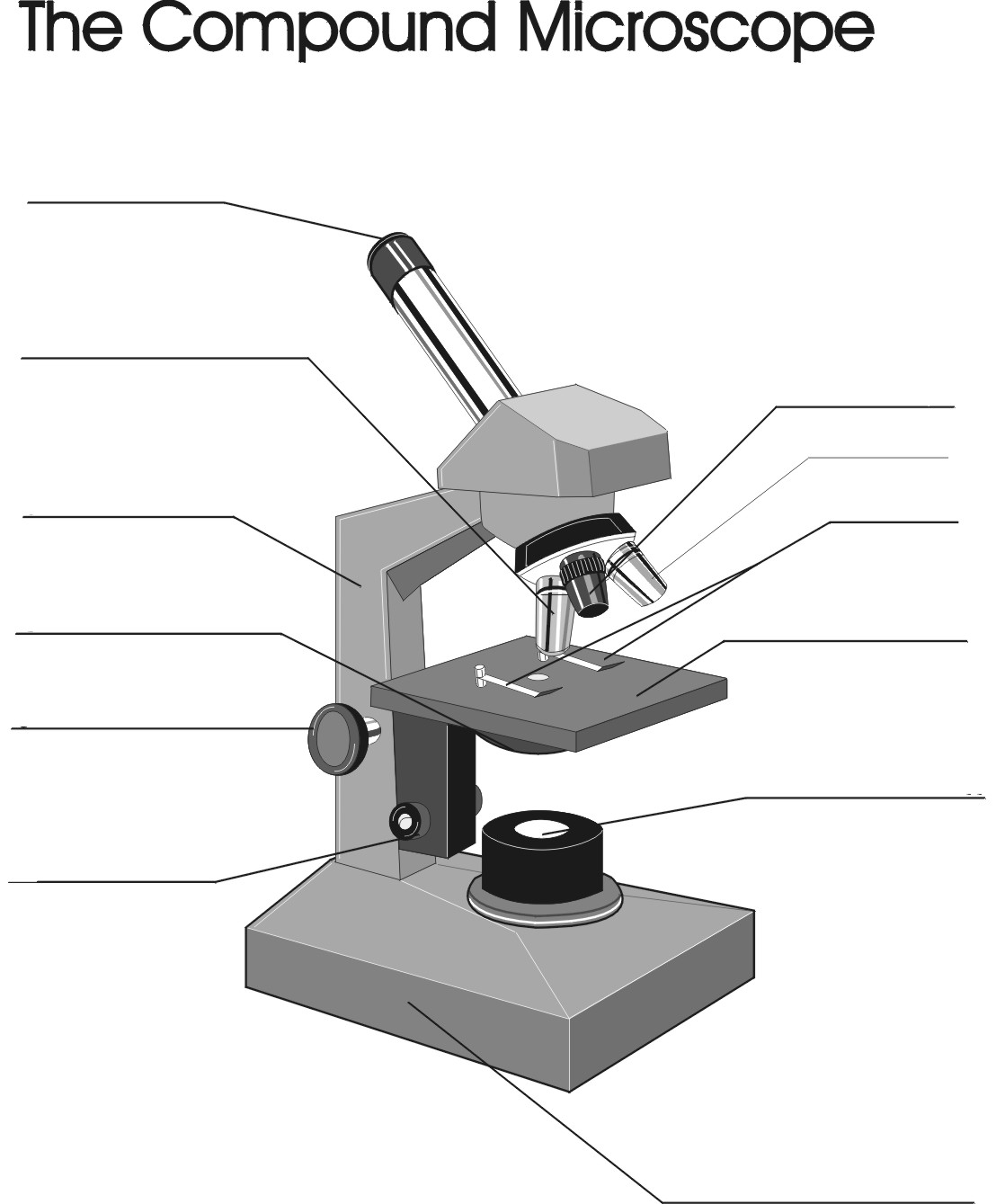 Labeled parts of the microscope – Parts of the Microscope Worksheet