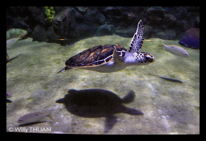 Phuket Aquarium   Phuket 101