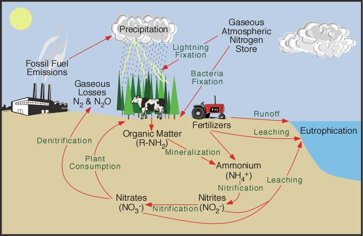9s The Nitrogen Cycle