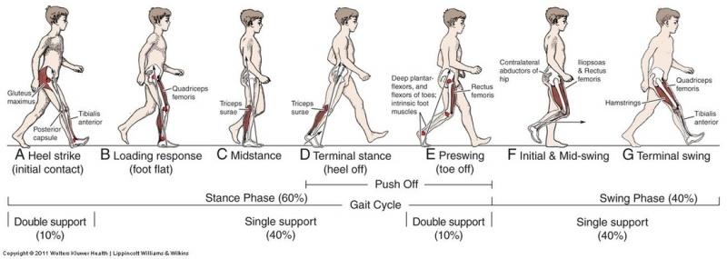 Gait in prosthetic rehabilitation - Physiopedia