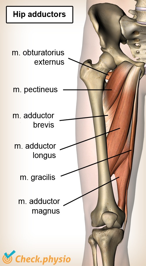 Adduction-related groin pain Physio Check