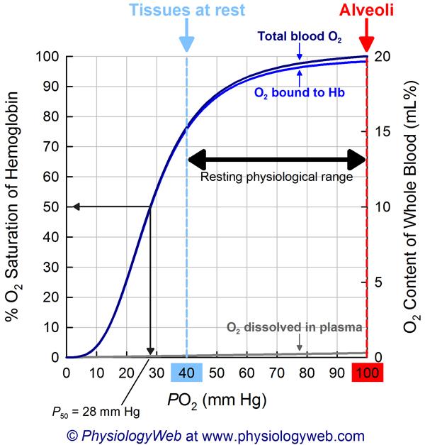 Physiology Graph Oxyhemoglobin dissociation curve - PhysiologyWeb