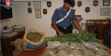 marijuana-san-luca