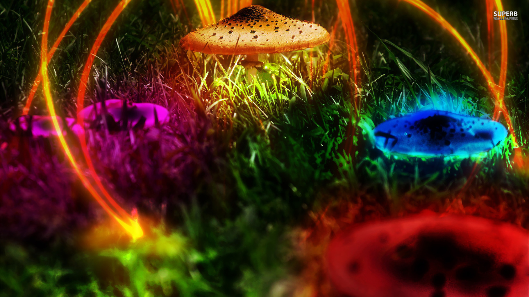 3d Neon Mushroom Wallpaper Uhd 3d Wallpaper Hd Images And Pictures Picamon
