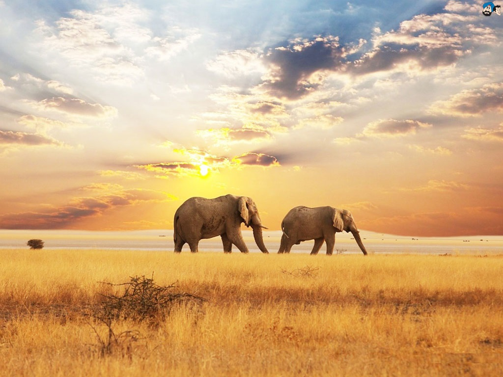 Sad Alone Quotes Hd Wallpaper 25 Smart Elephant Pictures Picshunger