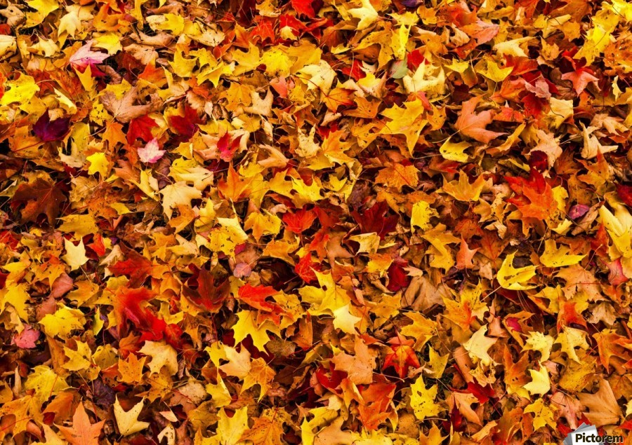 Scenic Fall Wallpaper Autumn Leaves On The Ground Iron Hill Quebec Canada
