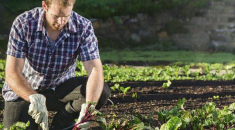 Six tips to keep yard work safe
