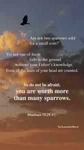 Matthew 10 29-31
