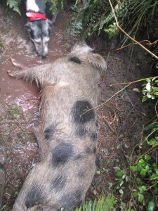 109 pound boar that ripped Snow