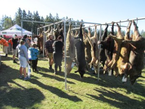 Animals hanging up at the Horarata comp