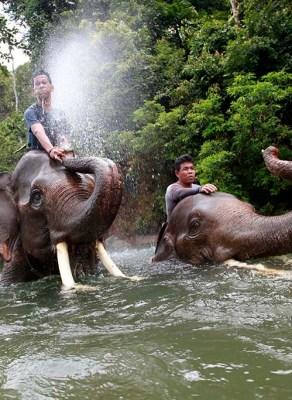 Patroli Gajah Conservation Response Unit (CRU) Sampoiniet. (PM/Oviyandi Emnur)