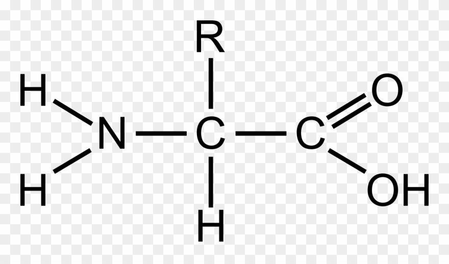 General Big Image Png - Generalized Amino Acid Diagram Clipart