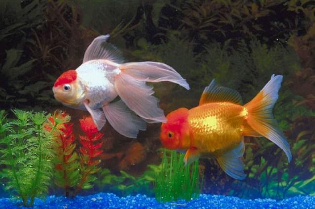 Aquarium Sales   Acrylic Aquariums on Sale! Aquarium Service