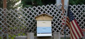 Campus is abuzz over its newest residents: Orchard Mason Bees