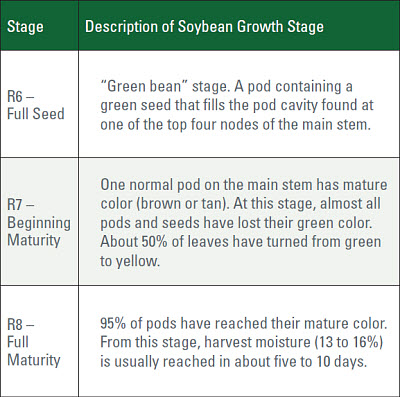 Soybean Frost Damaged Seed Early Freeze