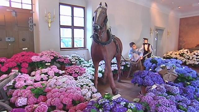 Solch große Blütenprach hat es in der Geschichte der Hortensienausstellung noch nie zuvor gegeben. Über […]