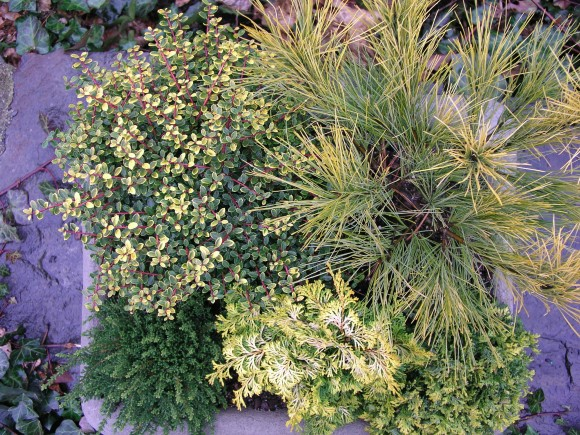 textural winter container planting