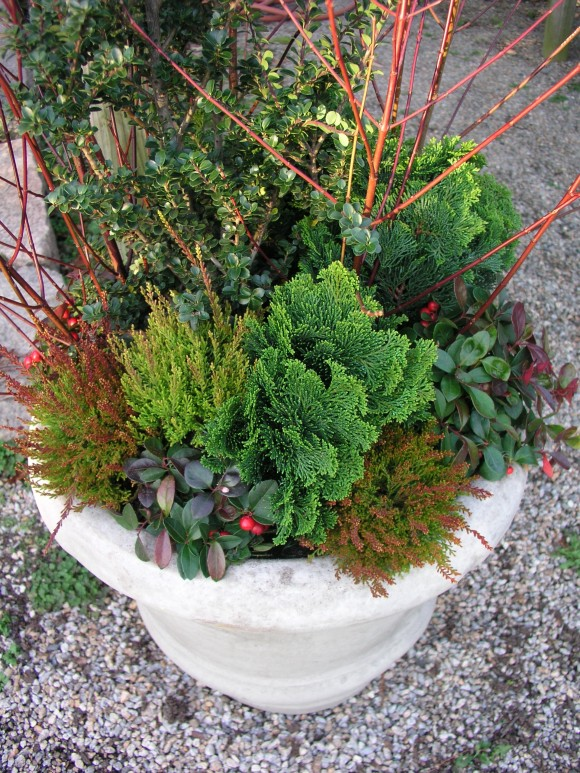 textural container planting