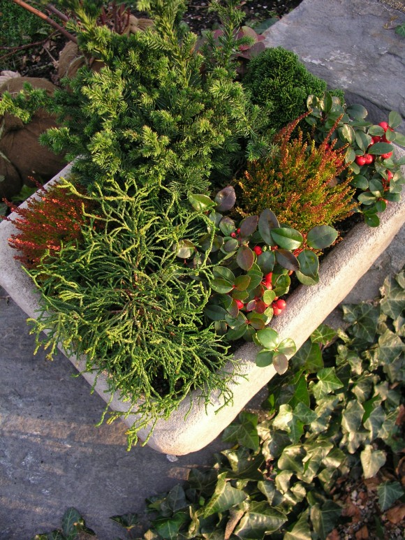 planting for winter containers