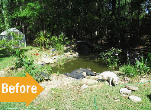 before, pond, landscape, backyard, weeds,