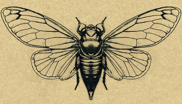 cicada songs http://www.cicadasongs.net/