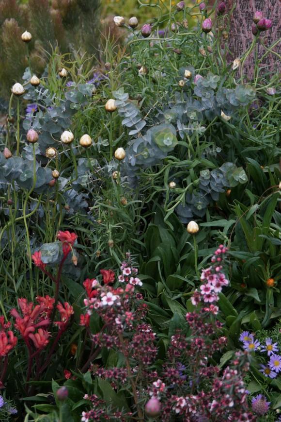 garden gallery  trailfinders australian garden presented by fleming u0026 39 s - best show