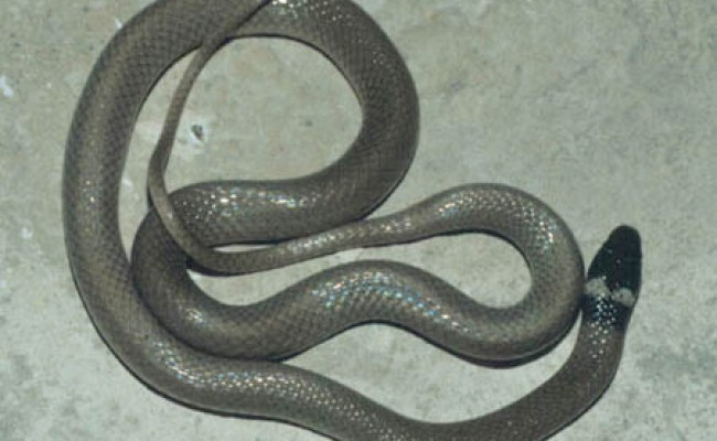 Snakes Of North America: Snakes