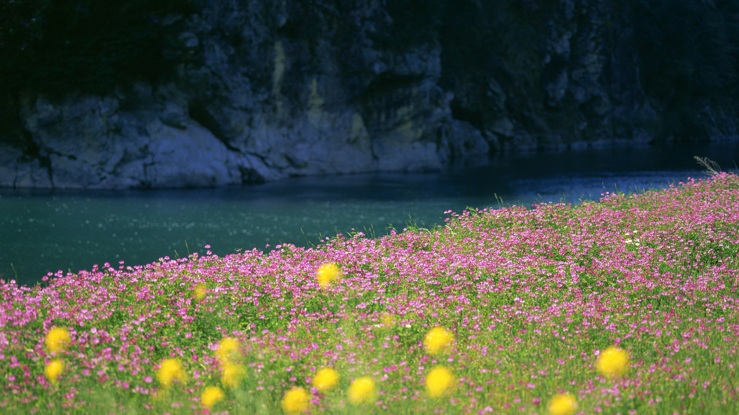Beautiful Quotes And Inspirational Wallpapers Hd Field Of Flowers Wallpapers Pixelstalk Net