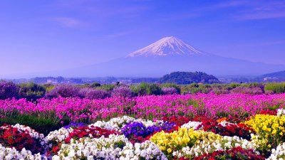 Spring in Japan Wallpapers HD free download | PixelsTalk.Net