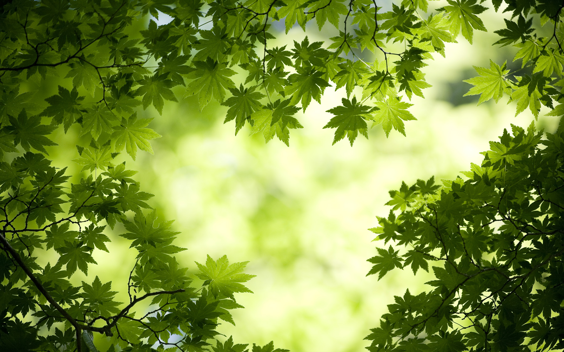 Hd Thanksgiving Wallpaper Free Green Leaves Wallpapers Pixelstalk Net