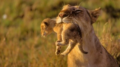 African Animals Wallpaper HD | PixelsTalk.Net