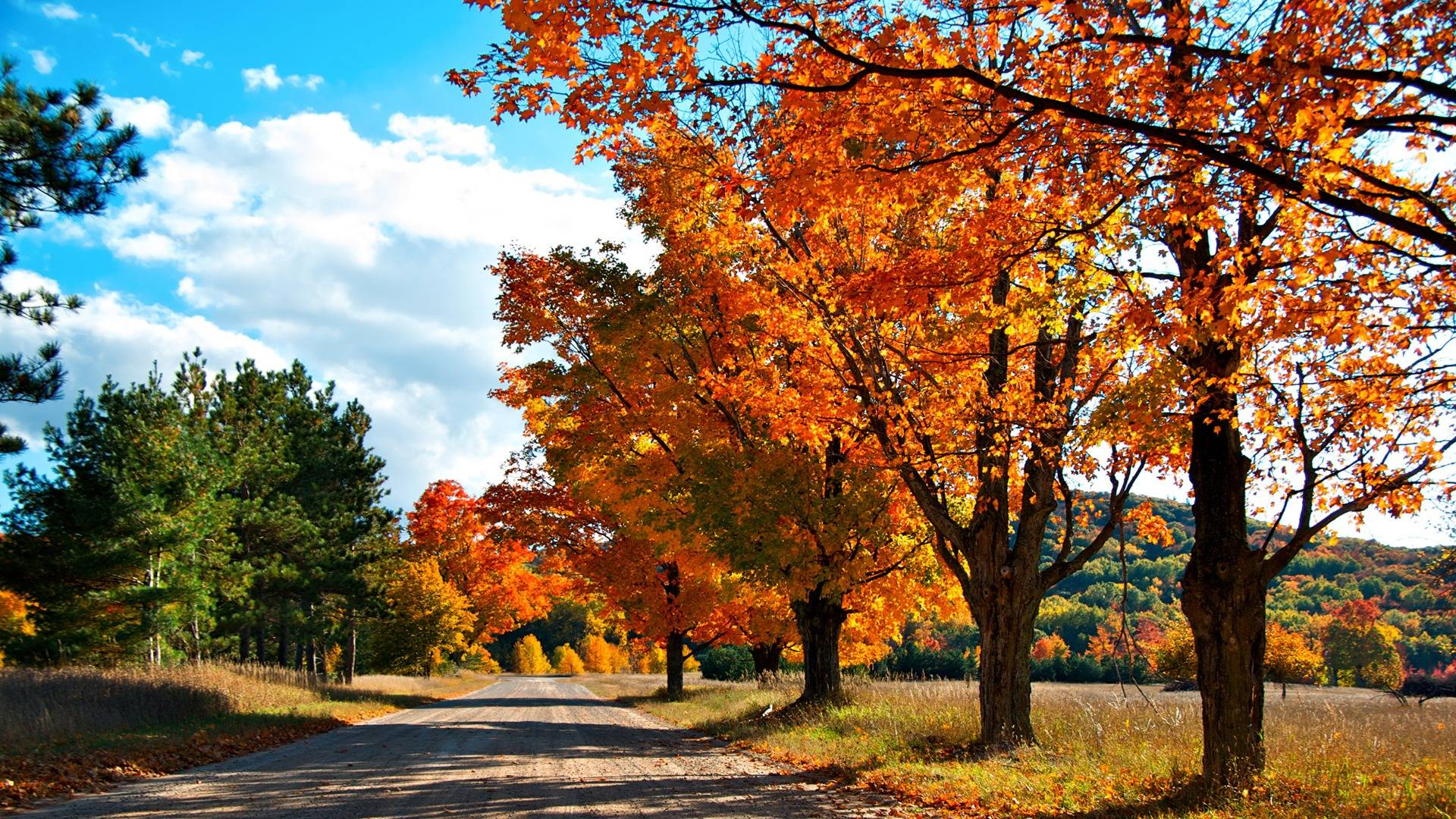 Hd Wallpaper Fall Leaf Change Autumn Wallpaper Hd Let You Feel The Magic Of Fall