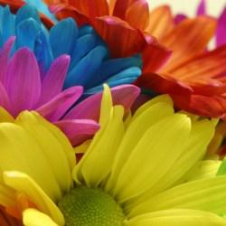 Colorful Flowers Wallpapers Hd Pixelstalk Net