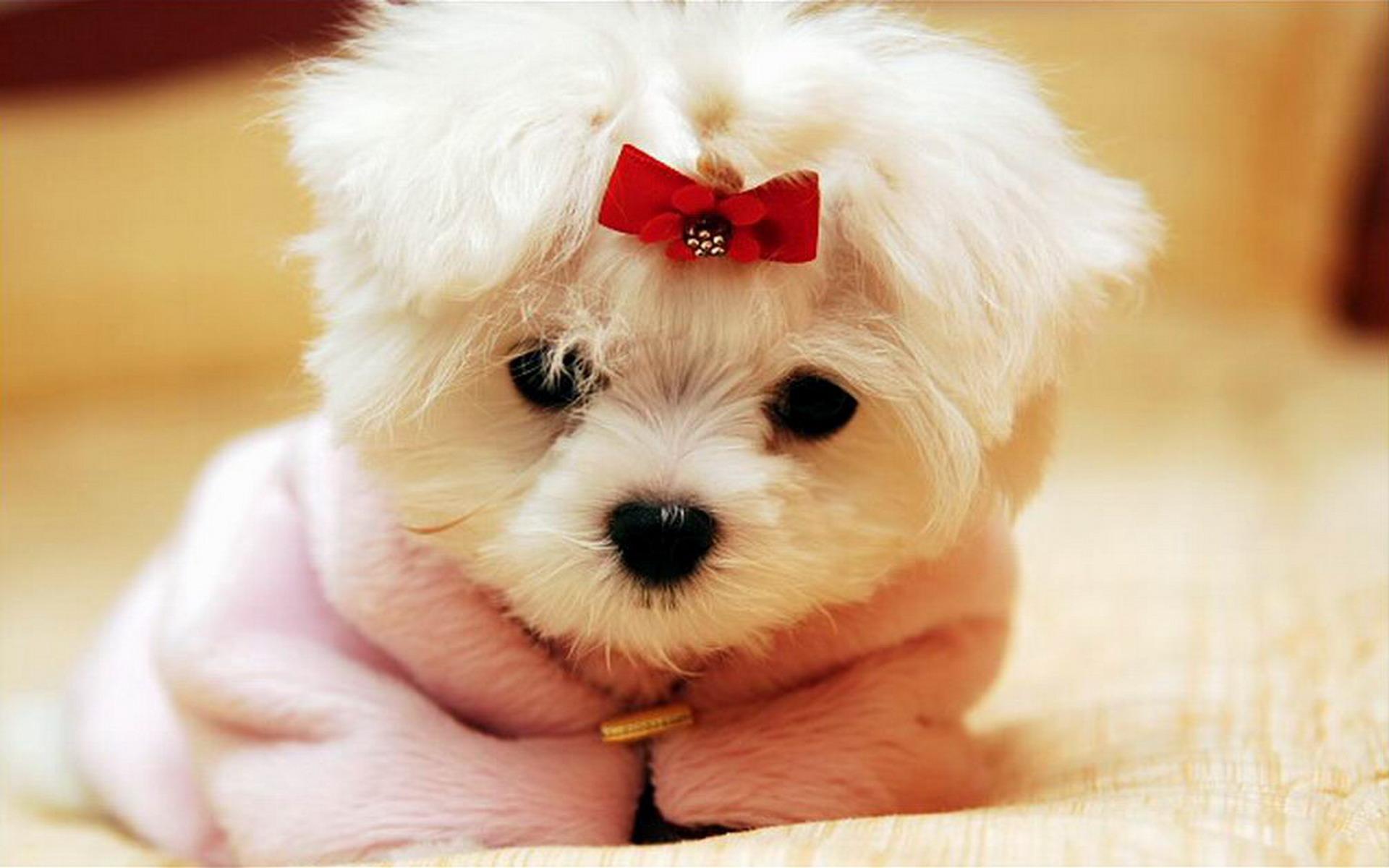 Cute White Rabbit Wallpapers For Desktop Cute Baby Animal Wallpapers Pixelstalk Net