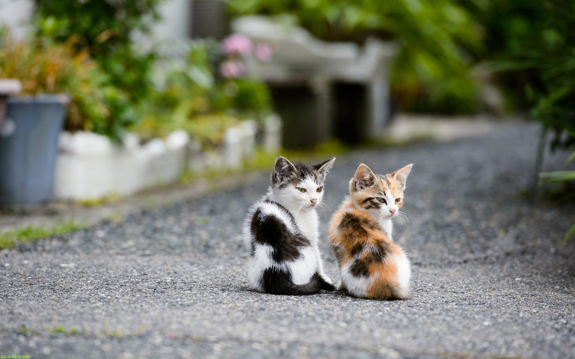 Cute Kitten Wallpaper For Mobile Double Cat Wallpaper Pixelstalk Net