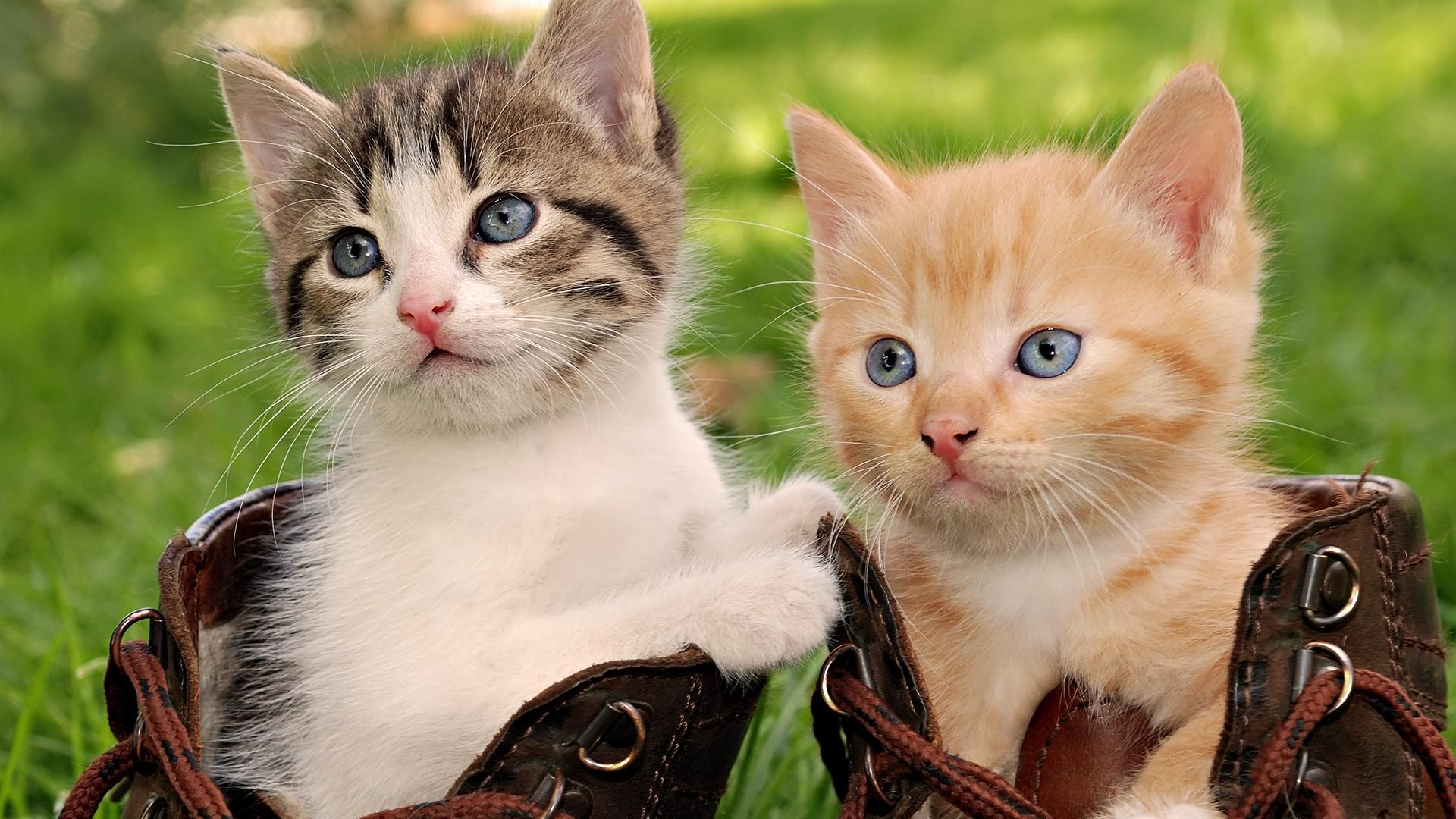 Cute Cat Hd Wallpapers For Mobile Double Cat Wallpaper Pixelstalk Net