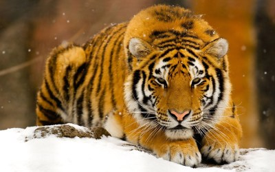 Wild Animals Wallpaper HD | PixelsTalk.Net