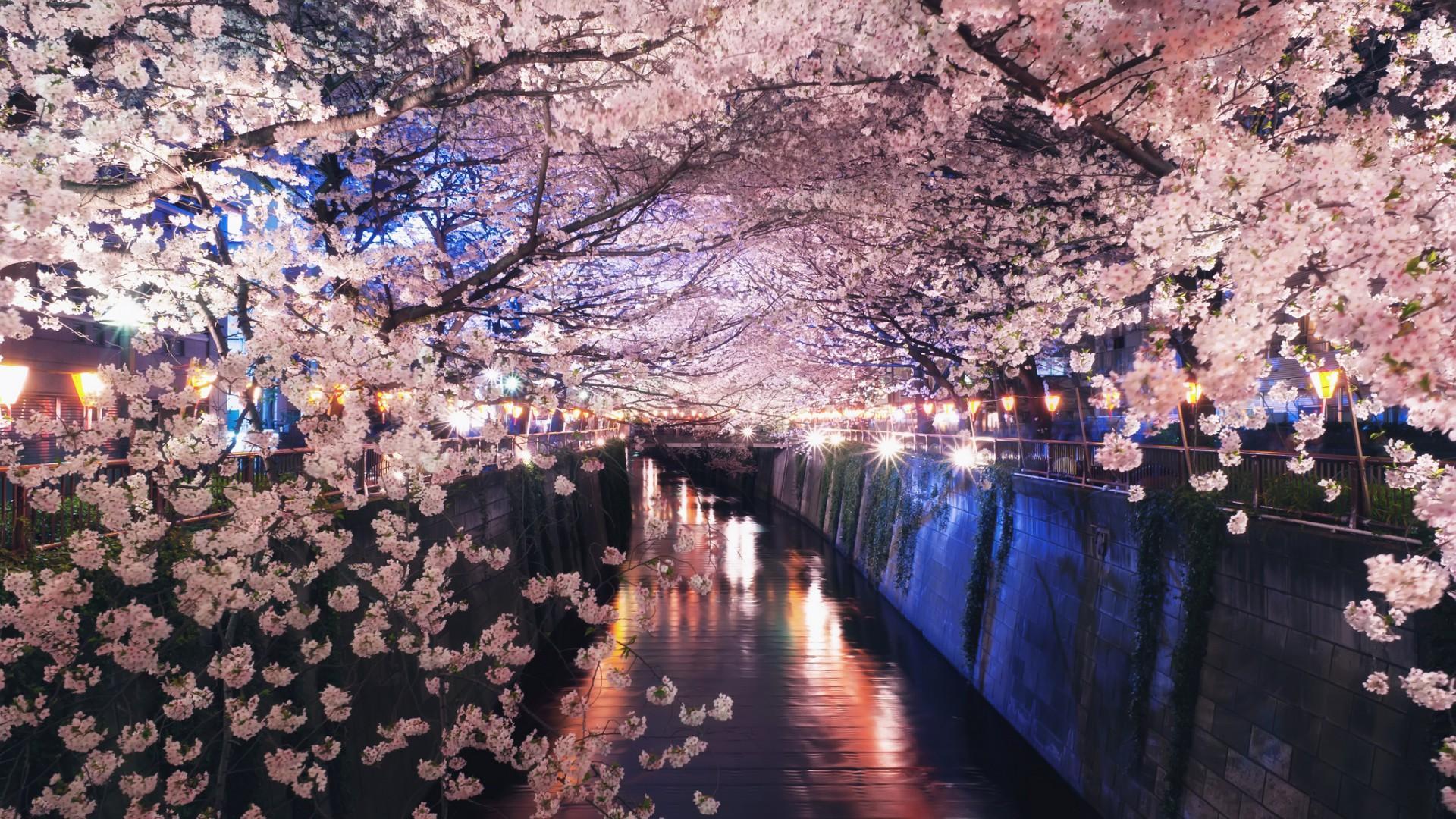 Free Fall Season Wallpapers Spring In Japan Wallpapers Hd Free Download Pixelstalk Net