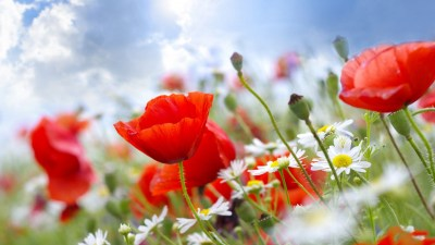 Summer Flowers Wallpapers | PixelsTalk.Net