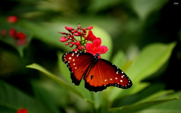 Animals Wallpapers For Mobile Free Download Flower Butterfly Wallpaper Pixelstalk Net