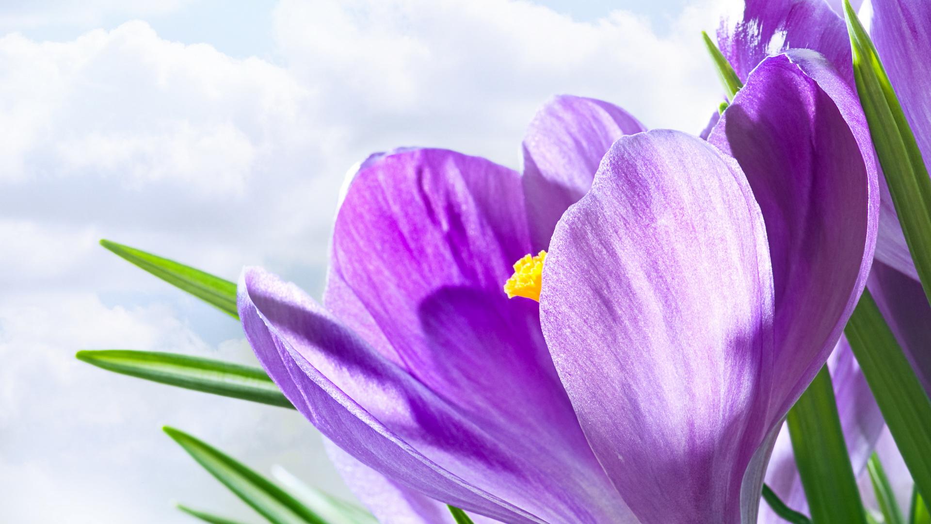 Lavender Color Wallpaper Hd Colorful Flowers Wallpapers Hd Pixelstalk Net