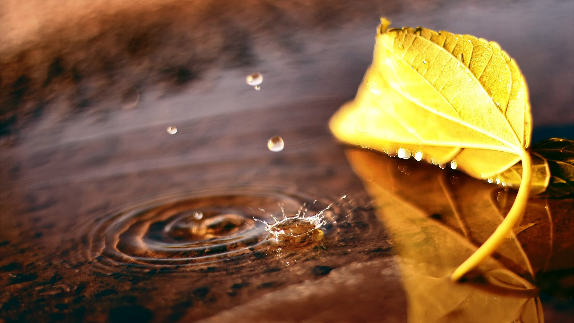 Free Fall Season Wallpapers Macro Leaf Puddle Drop Fall Autumn Wallpaper Media File