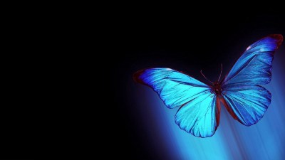 Blue Butterfly Wallpaper HD | PixelsTalk.Net