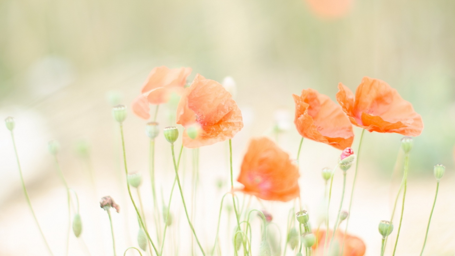 Cute Wallpaper For Facebook Timeline Cover Summer Flowers Wallpapers Pixelstalk Net