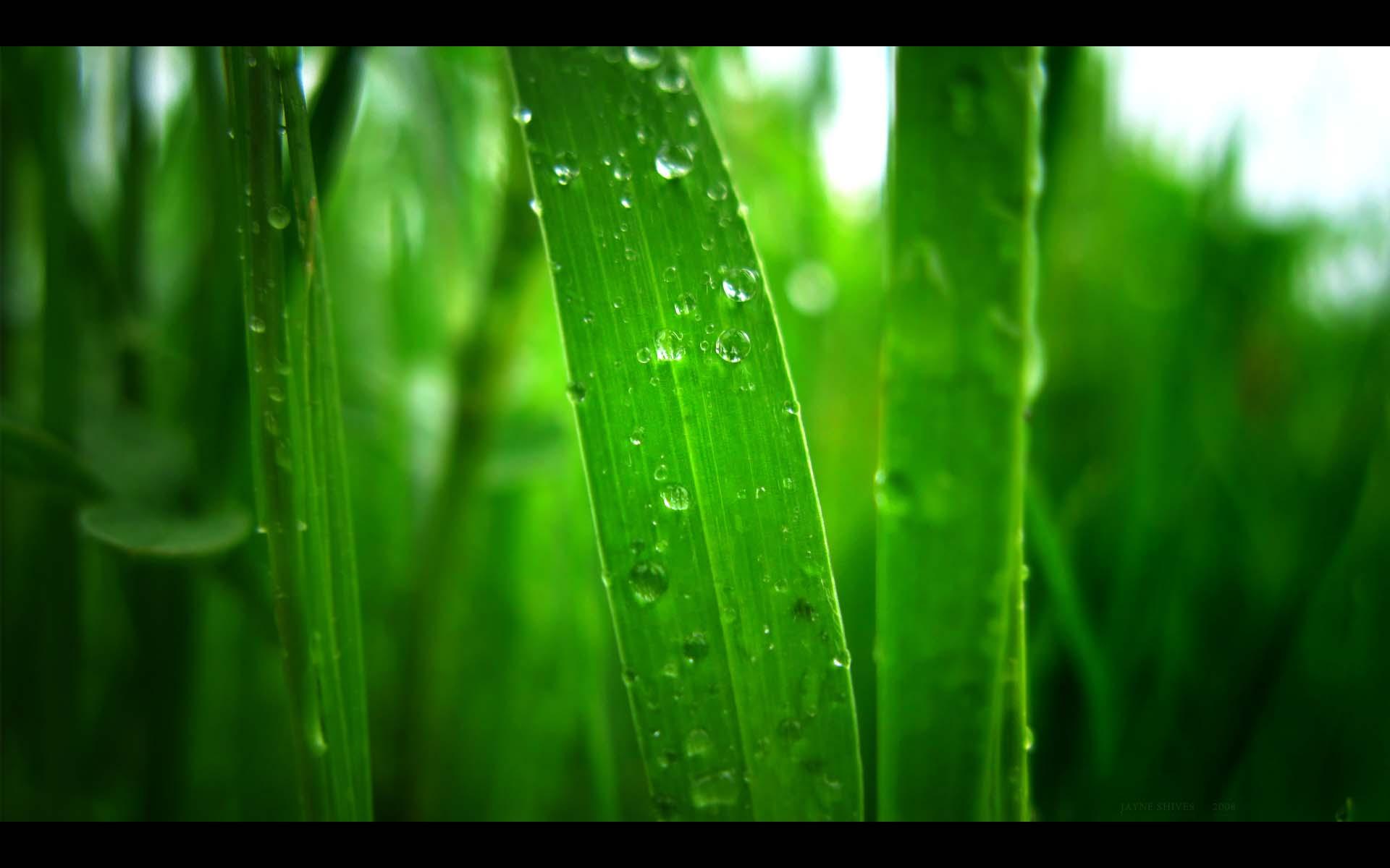 Falling Water Wallpaper 1080p Free Green Backgrounds Pixelstalk Net