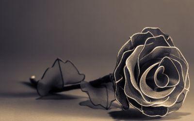 Black Rose Wallpaper HD | PixelsTalk.Net