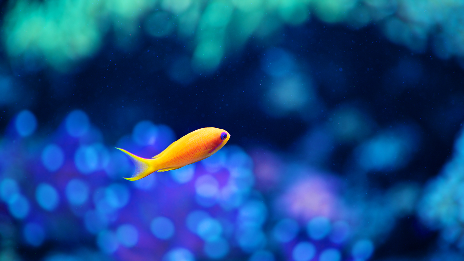 Koi 3d Wallpaper Fish Wallpapers Hd Pixelstalk Net