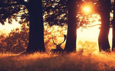 Free Download Deer Backgrounds | PixelsTalk.Net