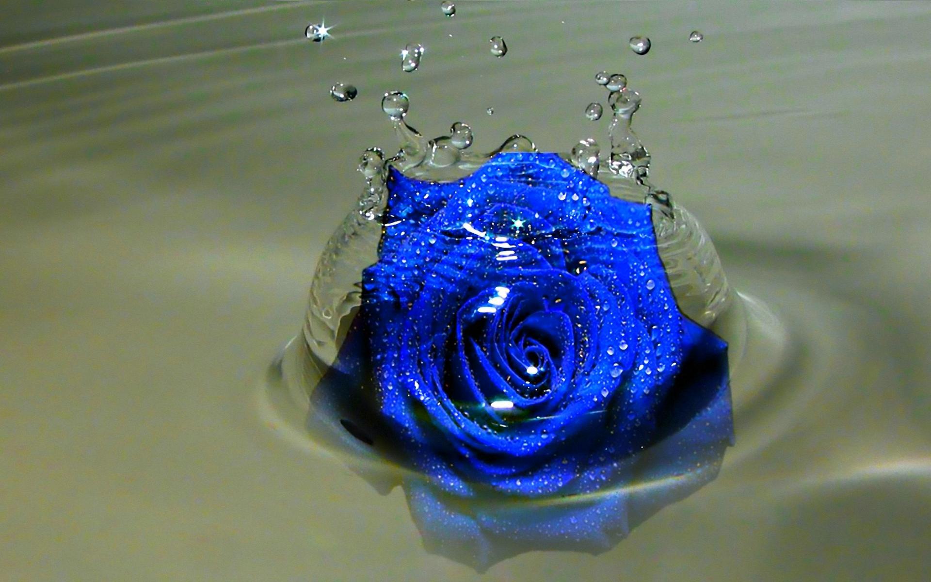 Broken Heart Quotes Wallpapers For Mobile Blue Rose Wallpaper Hd Pixelstalk Net